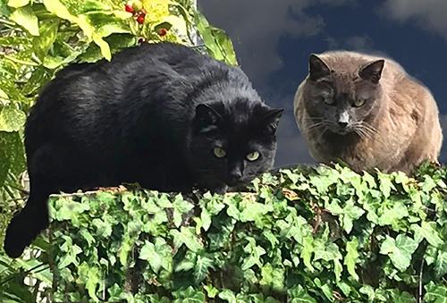 Aromathérapie et animaux - chats