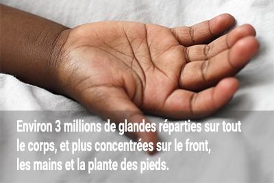 3 millions de glandes eccrines