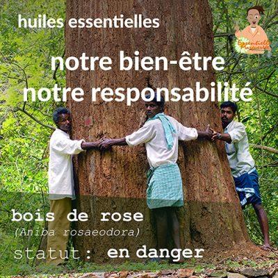 En danger : le bois de rose