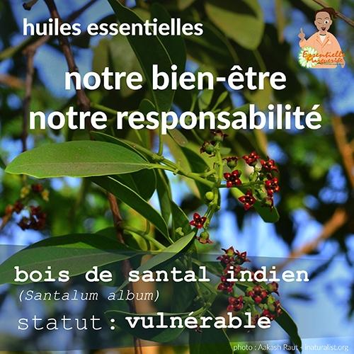 Bois de santal : vulnérable