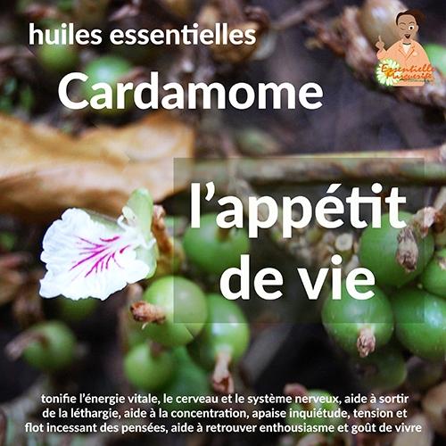 Essentielle Marguerite - Cardamome