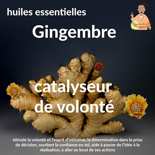 Essentielle Marguerite - Gingembre