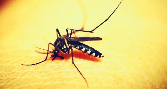 9 huiles essentielles anti-moustiques