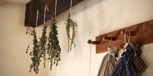 Plantes séchées