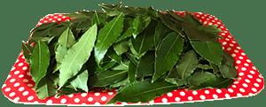 Huile essentielle laurier noble feuilles