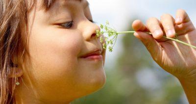 Huiles essentielles, odorat et émotions
