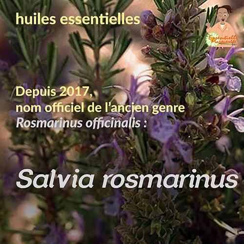 Salvia rosmarinus