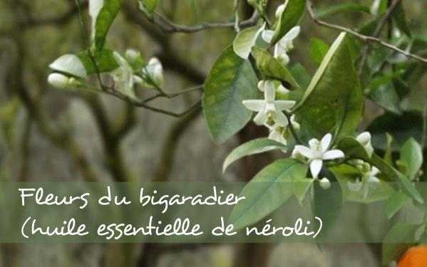 Néroli –bigaradier